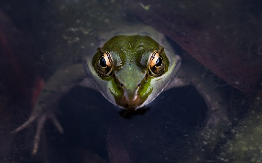 Is your productivity suffering from the boiling frog syndrome?