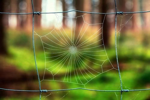 Grow Network